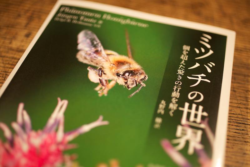 Honybee