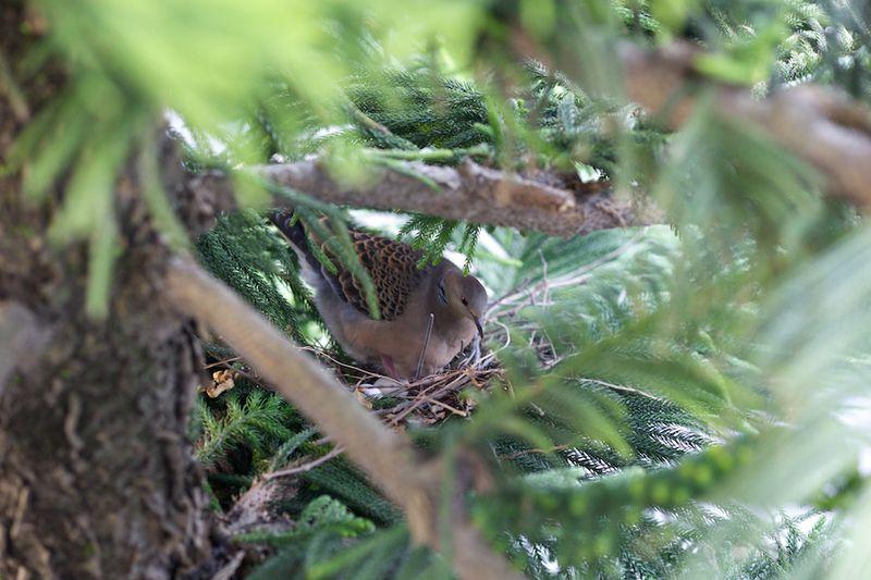 Bird13021503