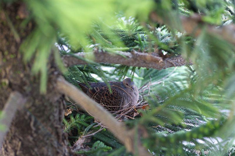Bird13021501
