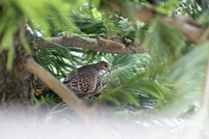 Bird13021504