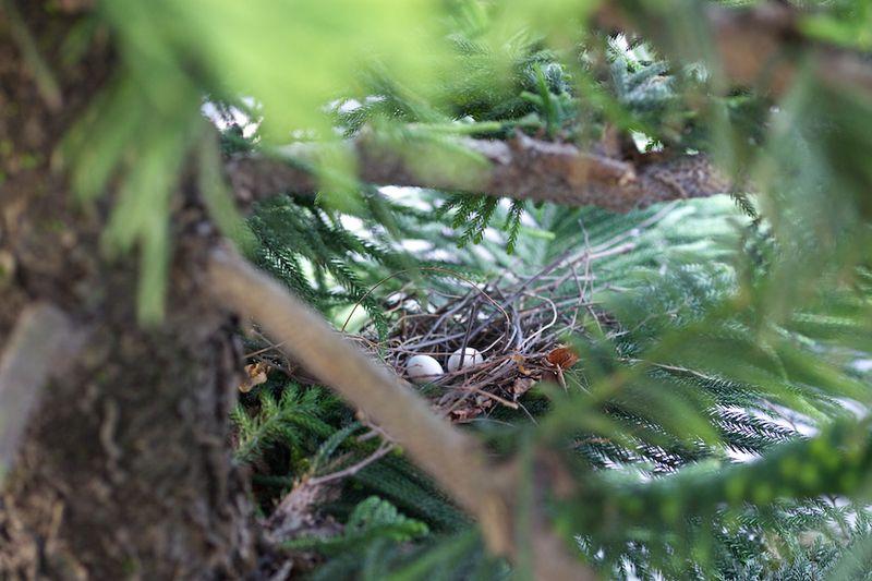 Bird13021502